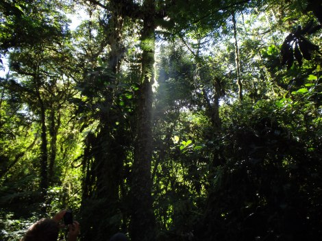 . . . some lush forest . . .