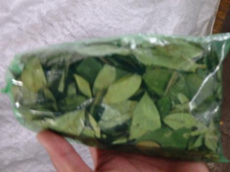 Coca leaves.